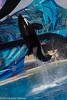 Shamu show-9632 (rob-the-org) Tags: iso100 noflash f90 orca seaworld uncropped shamu sandiegoca 1320sec 87mm 18250mm