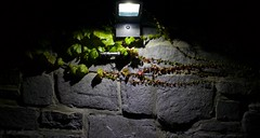 _49A0303 (mikeconley) Tags: light usa plant lamp wall night dark vermont darkness middlebury