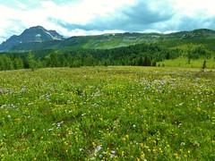 7-104 (Gnarlene) Tags: flower hiking banff healypass monarchramparts