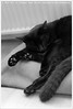 Kot Borya | Кот Боря (Dit is Suzanne) Tags: blackandwhite cat blackcat kat zwartwit boris kater кот боря borya zwartekat чернобелый views100 img9130 canoneos40d борис черныйкот sigma18250mm13563hsm ©ditissuzanne kotborya котборя 05072015