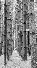 Through the symetry (IrishRedBeard) Tags: statepark usa northamerica 2015