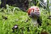 IMG_2996-Modifier (mycenium) Tags: mushroom automne canon belgium belgique region foret brabant champignon 6d wallon wallonie 2015 grez grezdoiceau wallone doiceau