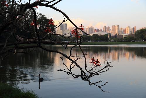 Thumbnail from Ibirapuera Park