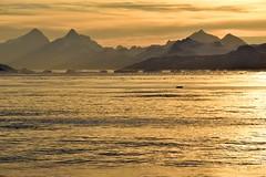 _DSC8469p (TC Yuen) Tags: glacier arctic greenland whales iceberg crusing floatingice polarregion greenlandeast