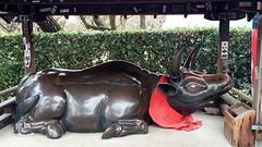 20151125_105256 (Freddy Pooh) Tags: kyoto japon kitanotenmangushrine
