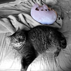 I leave you this evening with Kitty + @Pusheen ―two cats just chilling and loving life 🐱 (anokarina) Tags: pusheen kitty kitten cat instagram seattle washington appleiphone5 colorsplash southdelridge pnw plush stuffedanimal toy