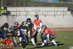 LMFA - Wildcats 24 - Jabatos 20