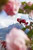 Gipfelglück im Jagdhof | www.jagdhof.it (Giardino Marling) Tags: lesen hotel wind urlaub natur pflanzen wolke superior blumen jasmin meditation rosen grün moment schlafen sein sonne ich bäume garten herz palme baum luft sitzecke wandern tourismus zeit südtirol wellness blüten duft meran paradies entspannen muskeln hotellerie atmen relaxen gärten erholung ruhe sitzkissen weinberge hortensien fühlen wohlfühlen genuss touristik nachdenken sträucher weinreben durchatmen meditieren kräftigen wohlbefinden gastgeberin strecken nische dehnen blütentraum loslassen verzaubert persönlichkeit nachhaltigkeit nachhaltig achtsamkeit spüren achtsam stärken hoteliere jagdhodf hotellieren gastgeben