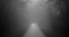 Le rendez-vous (david49100) Tags: maineetloire villevêque brouillard bw car chemin d5100 mist nb nikon nikond5100 path voiture