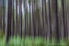 Early summer forest growth (Kiwi_Craig) Tags: slowshutterspeed abstract woodhillforest trees
