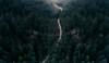 Subiendo (sgsierra) Tags: dron phantom v4 aerea bosque luz light pino demanda subida go up