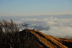 White dog. (lauratintori) Tags: color panorama panoramic atthetop clouds cloud greentrees trees arounditaly street whitedog dog nikond7200 d7200 nikon tuscany italy nature sky bluesky lovelyday mountains mountain pointofview photography photo pic picture ph lauratintoriph