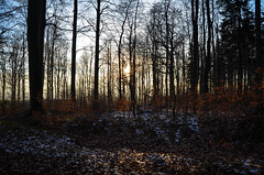 21.12.16 (Scheuer Photography) Tags: sunset trees procházka walk forest road winter sun newphotographer photo czechphoto czech liberecky kraj sever