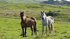cavalos (jakza - Jaque Zattera) Tags: campo juá dois cavalos