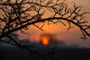 Framed Sunrise (Infomastern) Tags: söderslätt branch cloud countryside gren landsbygd landscape landskap sky soluppgång sunrise tree träd exif:model=canoneos760d exif:aperture=ƒ71 geocountry camera:make=canon exif:isospeed=100 camera:model=canoneos760d geostate exif:focallength=100mm exif:lens=efs18200mmf3556is geocity geolocation exif:make=canon