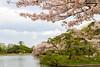 _MG_2022A (<<Jamms>>) Tags: sakura blossom cherry bloom japan yokohama tokyo nature flowers trees water pond spring park