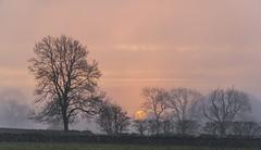 Sunrise (l4ts) Tags: landscape staffordshire peakdistrict whitepeak goldenhour sunrise alstonefield trees silhouette mist drystonewalls sun