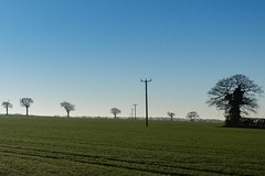 Telegraph Poles (Number Johnny 5) Tags: lines tamron d750 2470mm sunset east pole light trees silhouette wires minimal banal mundane fields anglia imanoot nikon telegraph norfolk dusk