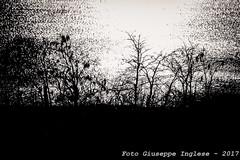 controluce (Giuseppe Inglese) Tags: giuseppeinglese canoneos70d sigma5015028 controluce momocromo blackwhite biancoenero natura lagodiconza