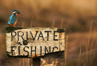 Private Fishing Kingfisher