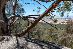 _PGK3144.jpg (Phil Kapitula) Tags: australia hike victoria youyangs