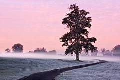 Tree at Dawn (Barry O Carroll Photography) Tags: tree mist path dawn sky pink morning landscape nature calm tranquil quiet outdoor maynooth kildare ireland