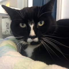 Kasey - 7 year old neutered male