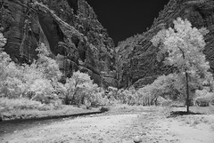 US-UT Zion NP - Temple IR 2016-07-07 (N-Blueion) Tags: