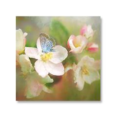 Wonderful nature (BirgittaSjostedt) Tags: flower blossom butterfly texture paint closeup birgittasjostedt nature frame magicunicornverybest macro