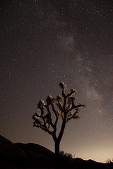 Happy Happenstance from Planned Patience (EBAUGHgraphy) Tags: canon eos rebel t1i sigma 1835 art stars desert luck planning sky dark joshua tree national park