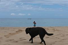 Beach Life 01