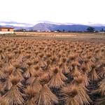 Landwirtschaft in Xizhou