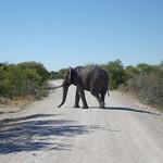 Elefant im Etoscha Nationalpark