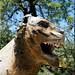 the Ain Leuh lion