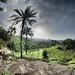 Togo - Lama bou - 20-6-2013 - 16h50