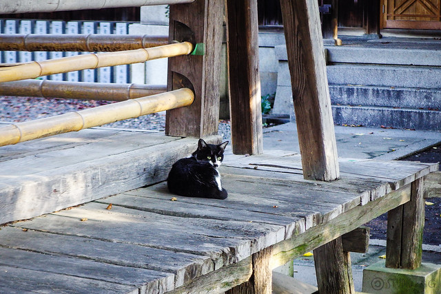 Today's Cat@2015-08-18