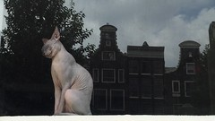 """I, I, I no like it. This go to the police!"" (maartje jaquet) Tags: amsterdam cat naked"