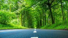 Naturel tunnel (drstar.) Tags: road green forest flickr tunnel flickrturkey