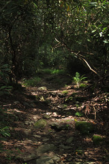sunny path (Molly Des Jardin) Tags: park trees light shadow plants usa sun green leaves forest rocks state pennsylvania earth path sunny dirt ferns dappled 2014 undergrowth susquehannock drumore 43215mm