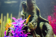 Aquarium-8 (sleepr56) Tags: pet fish bus water vw lost aquarium neon vampire fresh sword phish tetra freshwater neontetra platti platty fishofflickr vampiresword