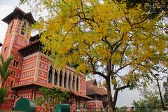 Kanikonna, Napier Museum, Tivandrum (eapen.sushant) Tags: flowers festival canon photography kerala cassia trivandrum fistula kanikonna