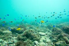 20150926-DSC_6231.jpg (d3_plus) Tags: sea sky fish beach japan scenery underwater diving snorkeling  shizuoka    apnea izu j4           nikon1 togai  1030mm nakagi  1   1030mmpd wpn3