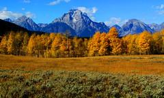 grand Teton National Park (udbluehens) Tags: grandtetonnationalpark mtmoran grandtetonfallcolors