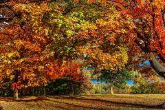Autumn along the Mississippi (Cole Chase Photography) Tags: autumn fall burlington canon october iowa mississippiriver 5d markiii crapopark
