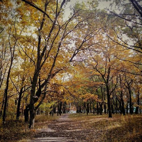 #таганрог #осень