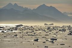 _DSC8377 (TC Yuen) Tags: glacier arctic greenland whales iceberg crusing floatingice polarregion greenlandeast
