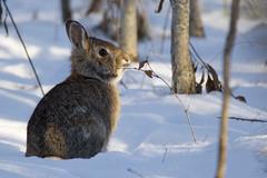 6N1A5254 (onegreatcity55) Tags: canada nature canon wildlife manitoba gimli assiniboinepark oakhammockmarsh lakewinnipeg ftwhyte