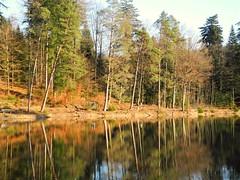 Spiegelung (almresi1) Tags: wood winter lake see dezember wald spiegelung mirroring althtte welzheim ebnisee