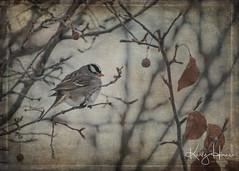 Back yard visitors (kellykhorne) Tags: backyard birds winter texture 2lilowlstextures outdoor trees