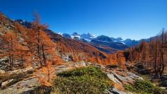 Autumn time #3 (antony5112) Tags: fall autumn mountain orange green ayas tzere trees larches sarezza testagrigia